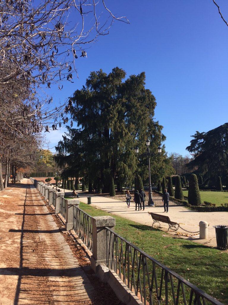 El árbol más antiguo del retiro es este Ciprés calvo de 1632 CC @SecretosdeMadri https://t.co/0ZhHC0QeYv