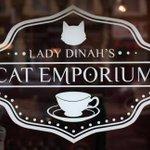 猫カフェがロンドンデビューした結果こんなんなっちゃいました。