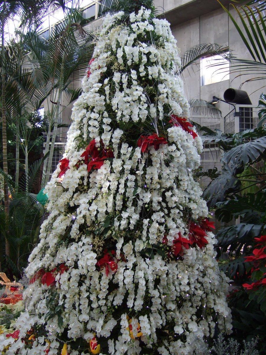 Orchid Christmas Tree.Orchid Kingdom On Twitter Phalaenopsis Orchid