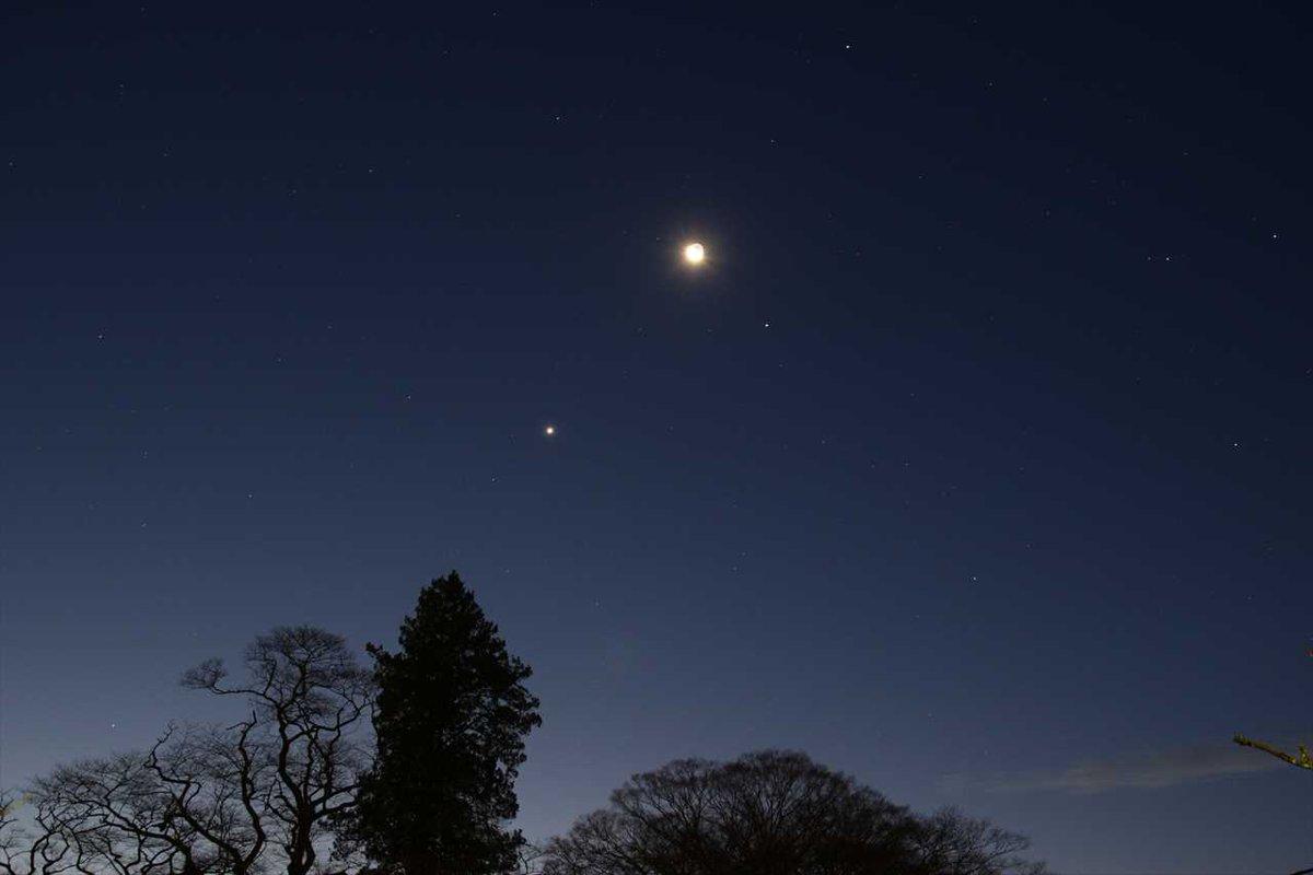 暁のランデブー(明日は月と金星が大接近します)