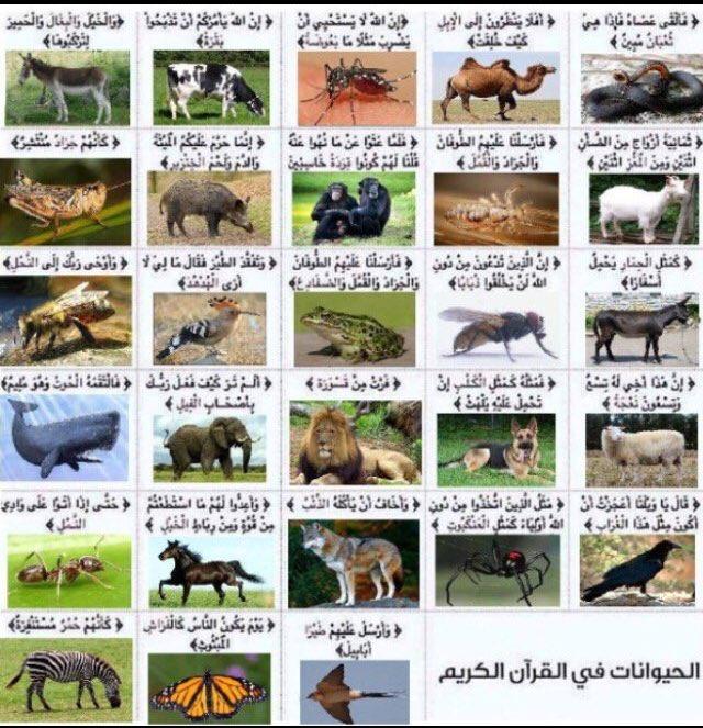 قصص الحيوان في القرآن - ذئب يوسف - الجزء الثاني