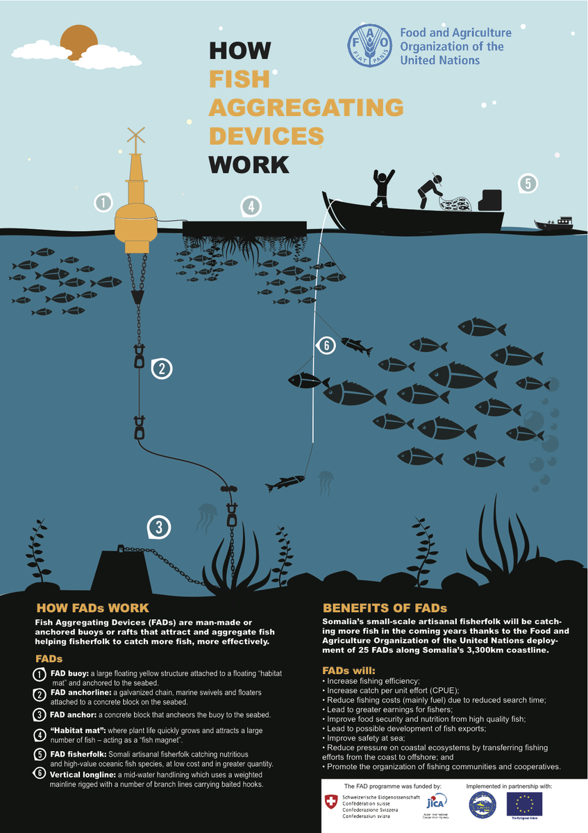 Fao in somalia on twitter infographic see how fish for Fish aggregating device