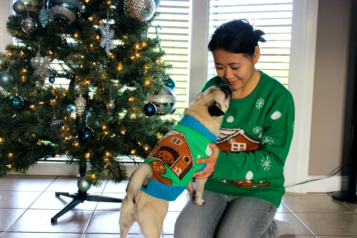 Matching Ugly Christmas Sweaters For Dog And Owner.Darcy Matheson On Twitter Ho Ho No Matching Dog Owner