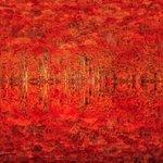 紅葉が一面を真紅の海のように覆い尽くす絶景写真‼️