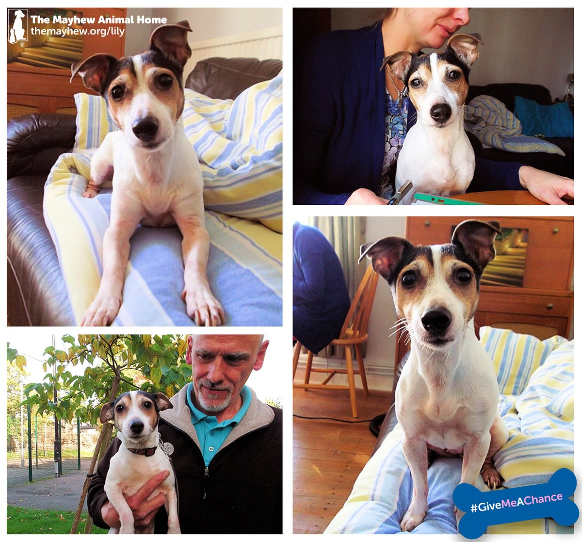 Lily is ever such a friendly girl- could you welcome her into your life? https://t.co/dObYB1PcQl #adoptdontshop https://t.co/4BAWK0z7e7