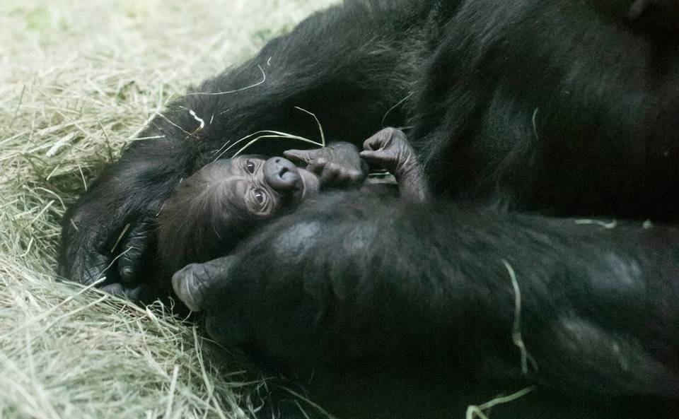 The Fort Worth Zoo Latest News Breaking News Headlines Scoopnest