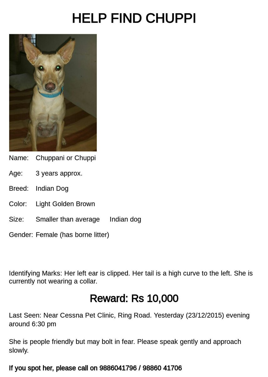 Bangalore people please help us find Chuppani, the most amazing dog in the world. https://t.co/0lTOeZD3bt