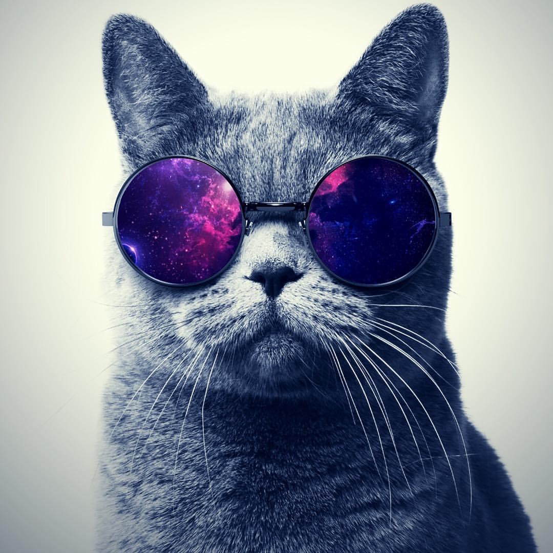 Рисунками прикольные, картинки крутые с котом