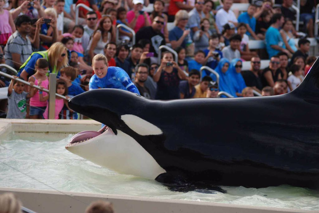 BREAKING: 'Another Death at @SeaWorld Shows a Tank is No Place for an Orca' More: https://t.co/CSSbbWSQ0W #Blackfish https://t.co/CSNqsdkGsY