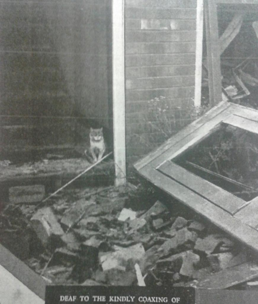 #Manchester blitz Dec 1940: Ginger the cat refused to leave bombed home. His owner had been killed  https://t.co/UIkUwiBhMV #Lestweforget
