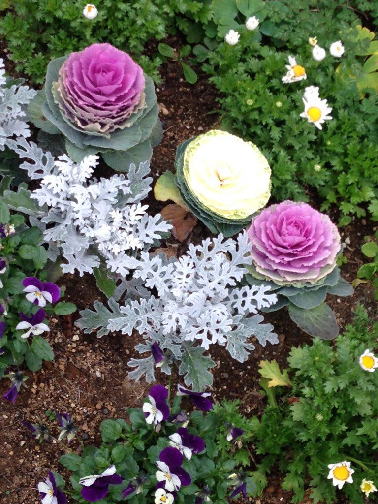 近所のおばさまの花壇見納めー∩˘ω˘∩