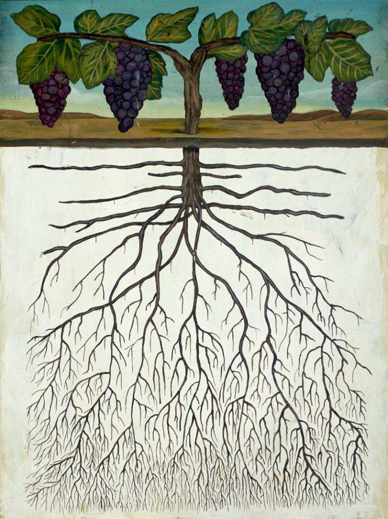 the grape vine weather report 12-02-2021
