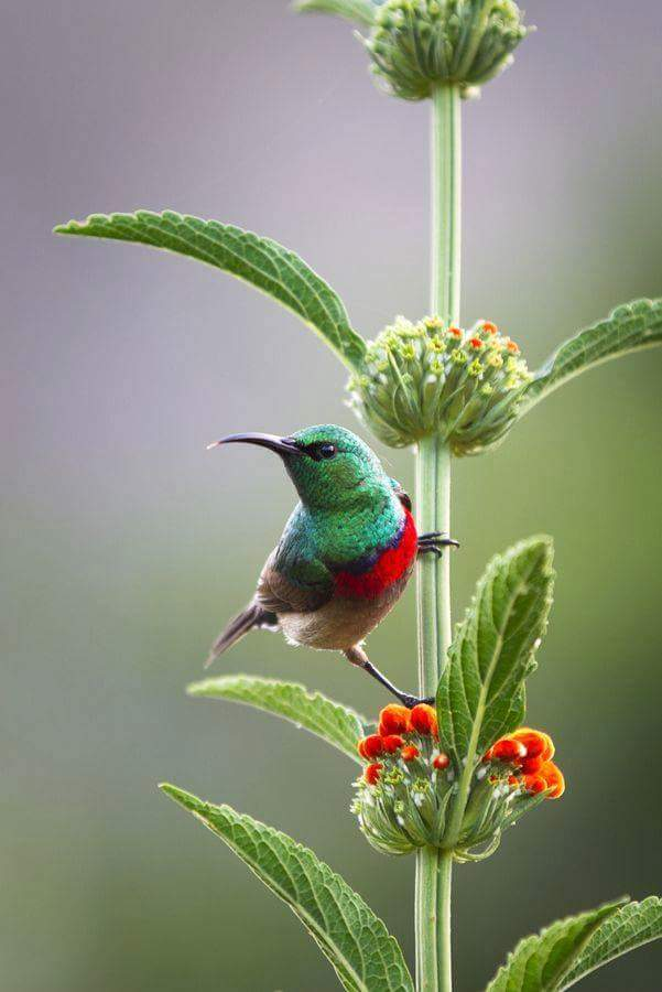 Indian Angels On Twitter Beautiful Nature Birds Flowers Photography Tco PvNNSl97jd
