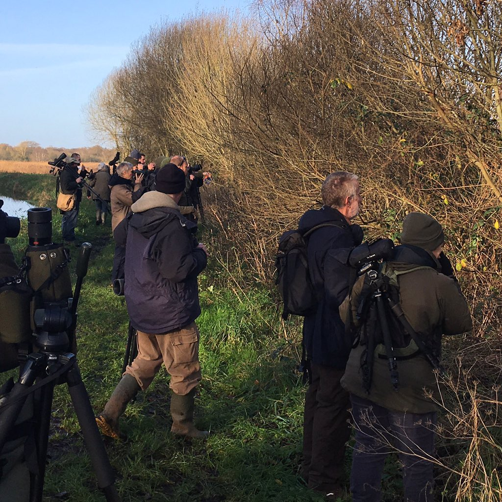 Pretty Good Views Of Dusky Warbler This Morning At Rspb Ham Wall Showed Well After Early Test Of Patience Liferpic Twitter Com Yep0dzhbqg
