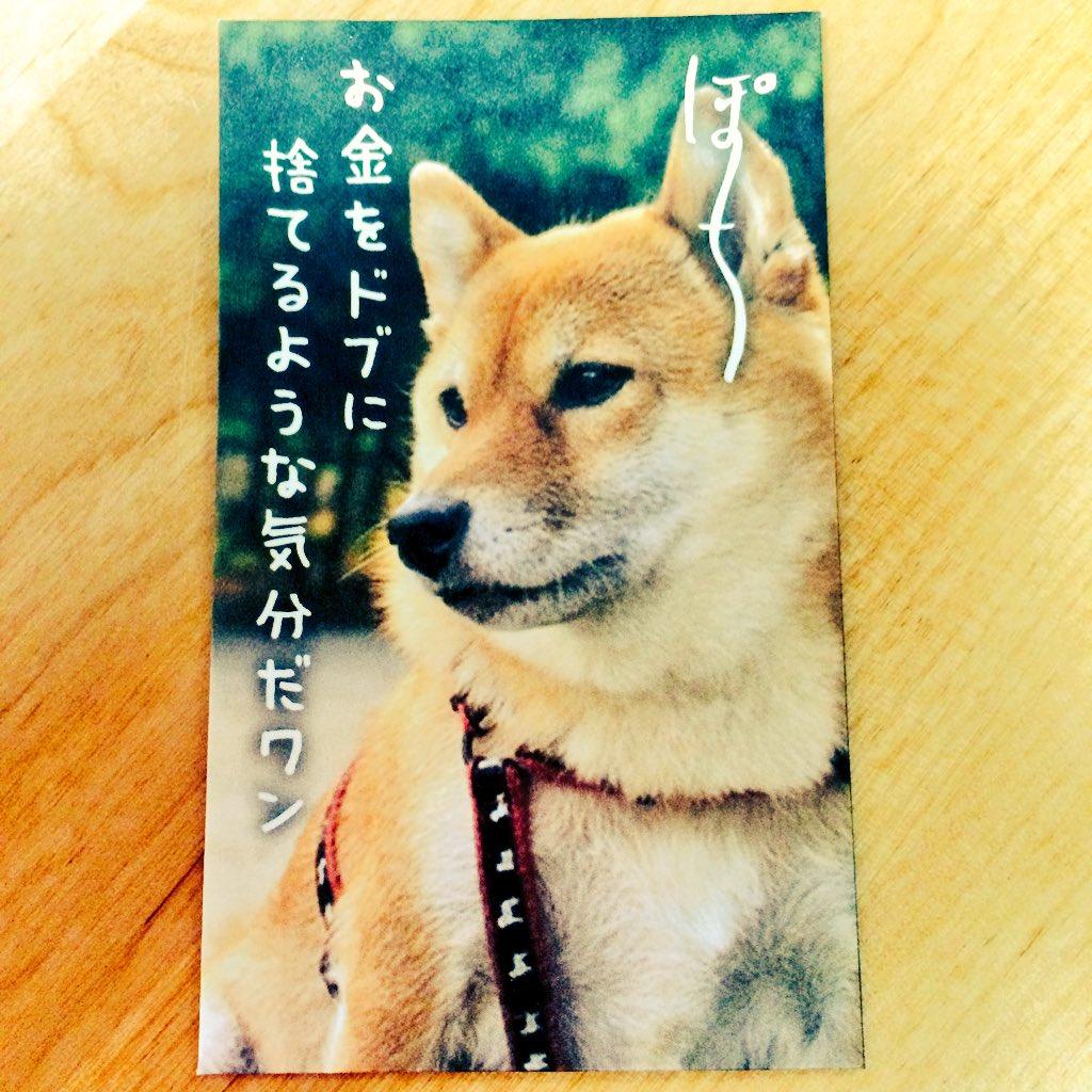 このぽち袋、柴犬かわいいし何かほっこりしたひと言が書いてあるんだと思ってよく見ないで買ってきてしまった。 使えない(。pω-。)