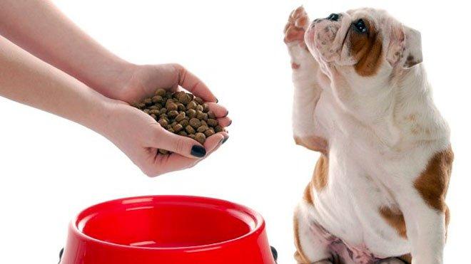 Trasformano il sangue dei mattatoi in farina delle crocchette per cani