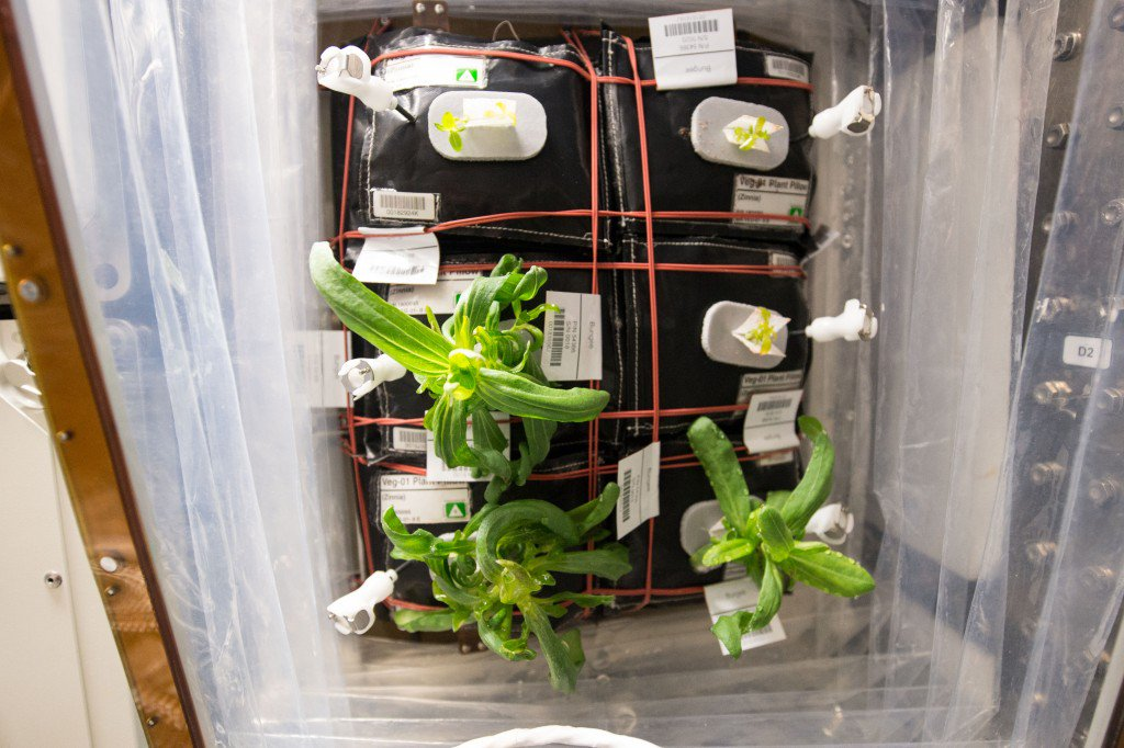 Zinnia Flowers Starting to Grow on the International Space Station- Zinnia flowers ... - https://t.co/jV89sRvg9S https://t.co/VPBdDx6HKv