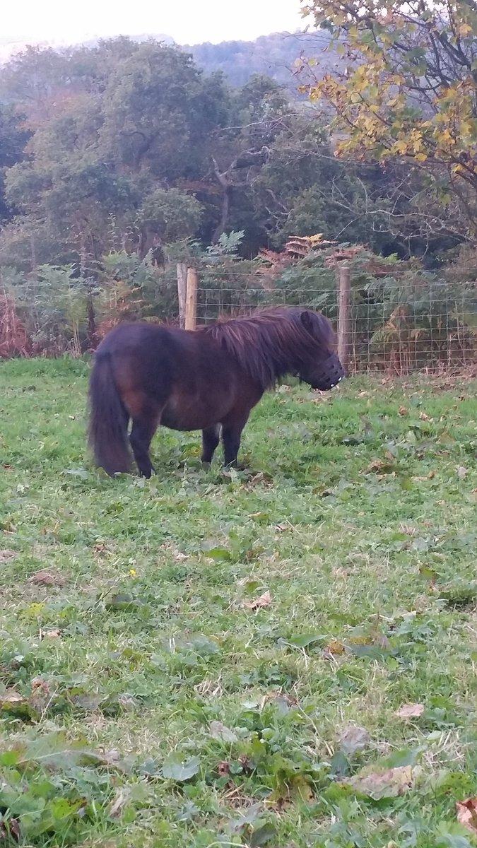 @ROOM94 @kieranlemon said earlier that he found a horse with his hair. My mini shetland has the same hair as him