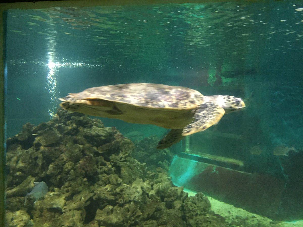 Hasil gambar untuk kura kura ocean park jepara