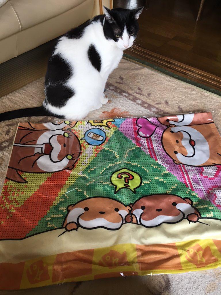 鍵条漆さん @kagijouurushi のこつめってぃブランケットが届いた(ノ´▽`)ノ♡ めちゃくちゃかわいくてあったかそうです♪ https://t.co/EfewW4UiPV