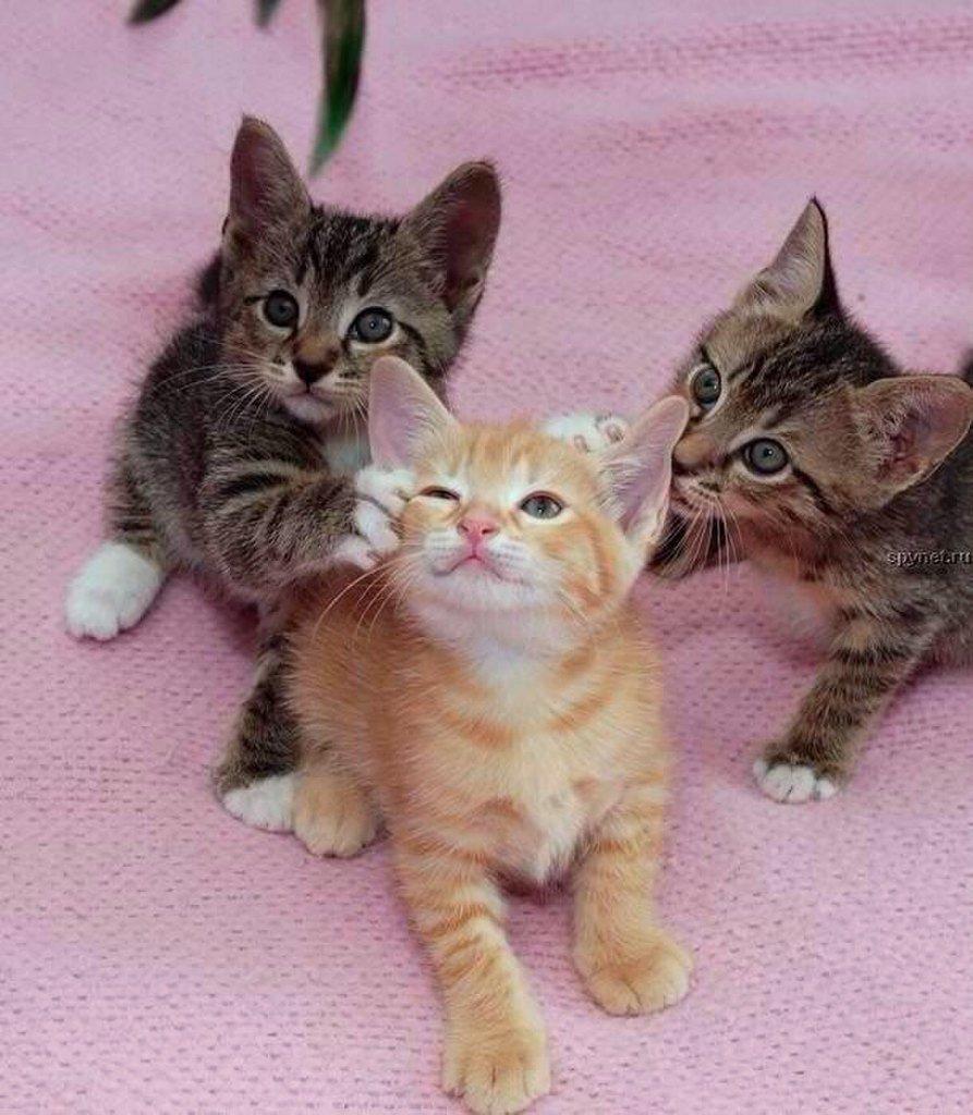 Смешные картинки котят без надписей