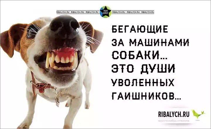 Холодницкий обеспокоен низким уровнем финансирования антикоррупционной прокуратуры в проекте бюджета-2016 - Цензор.НЕТ 8781