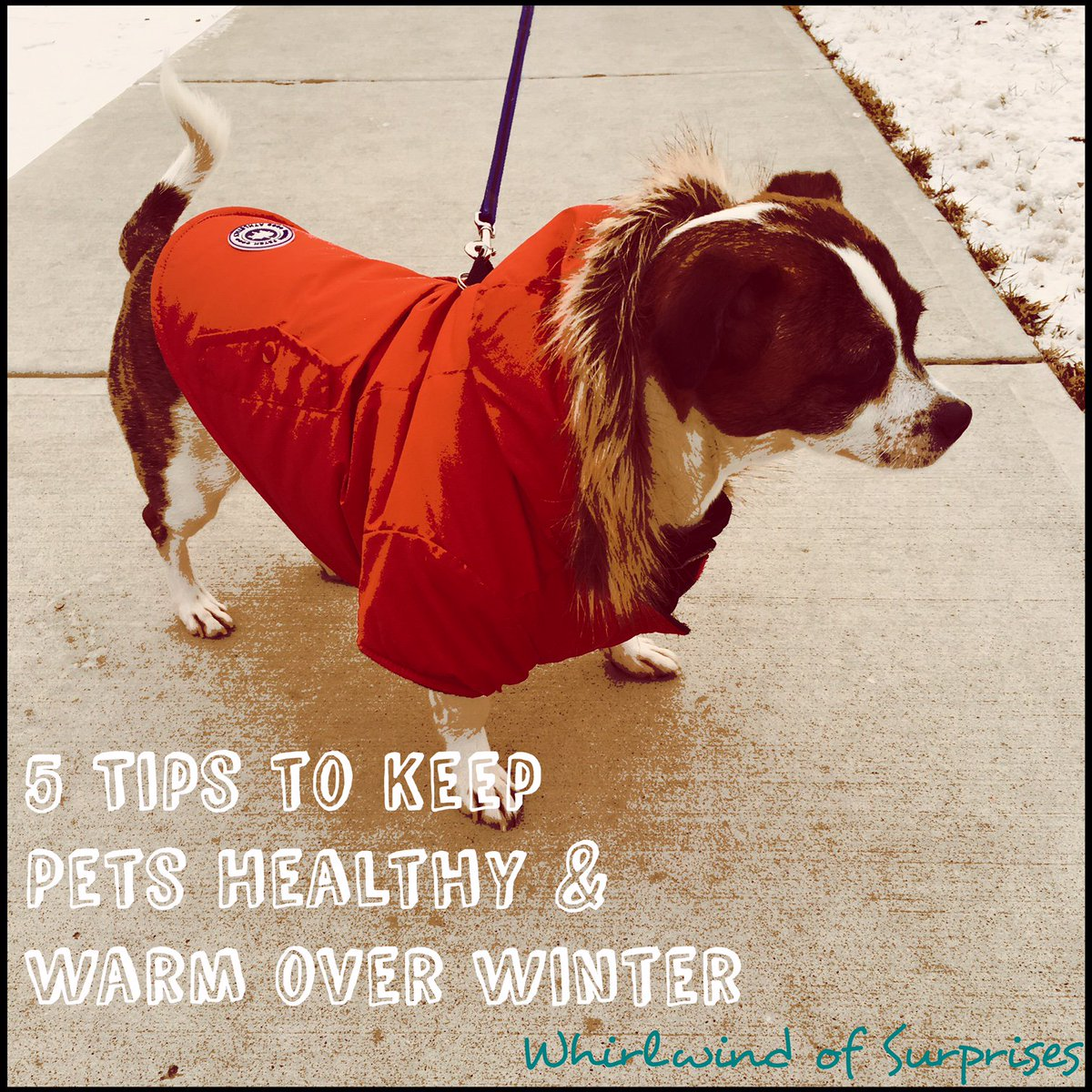 Winter Health Tips for Dogs