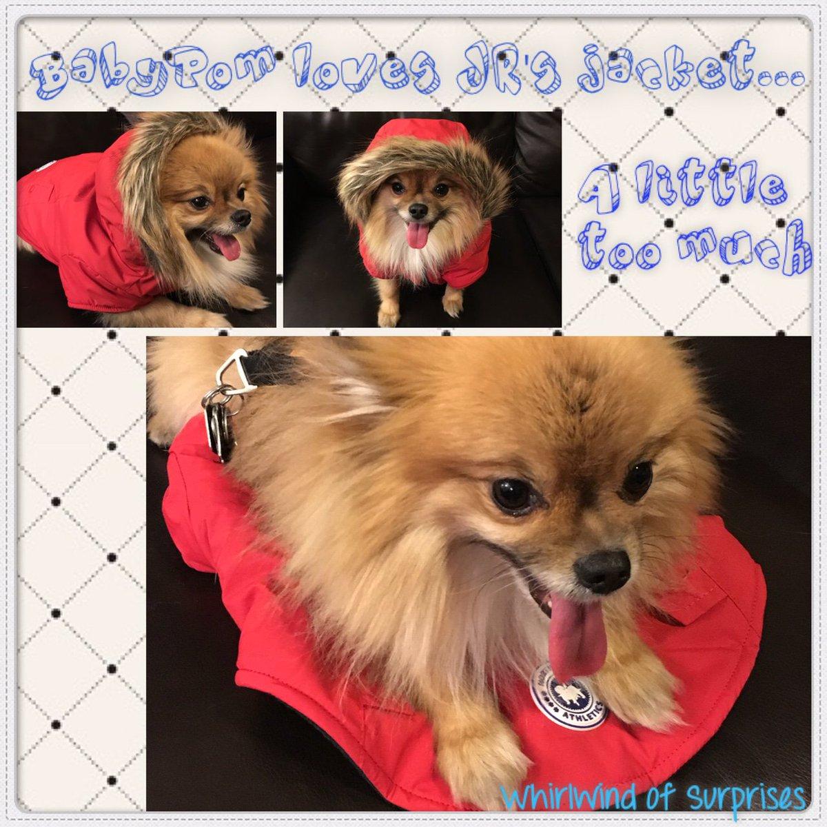 affordable quality dog jackets