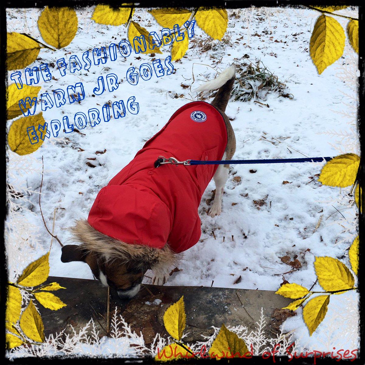 Jack Russell winter jackets
