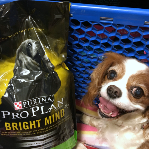 Senior Dogs Need Specialized Nutrition #BrightMind - https://t.co/xLxPInTbxu via @Felissahadas #sponsored https://t.co/SjGweghzM6