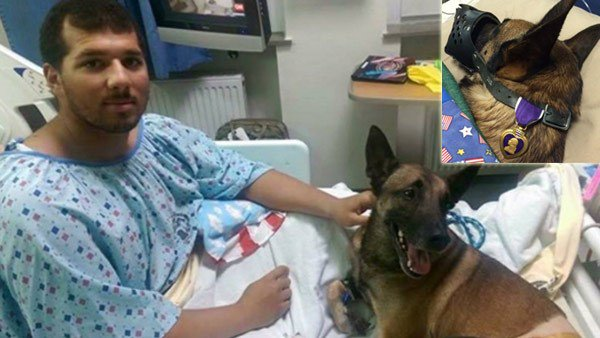 Dog stays with handler during soldier's recovery