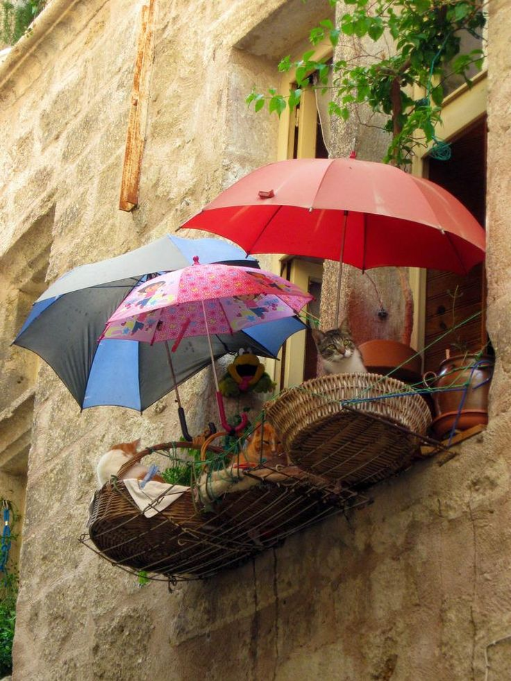 """Three cats with three umbrellas lounging on a basket balcony in Italy, where else? "" https://t.co/BUshqfz0bS https://t.co/t6rNGKR3gO"