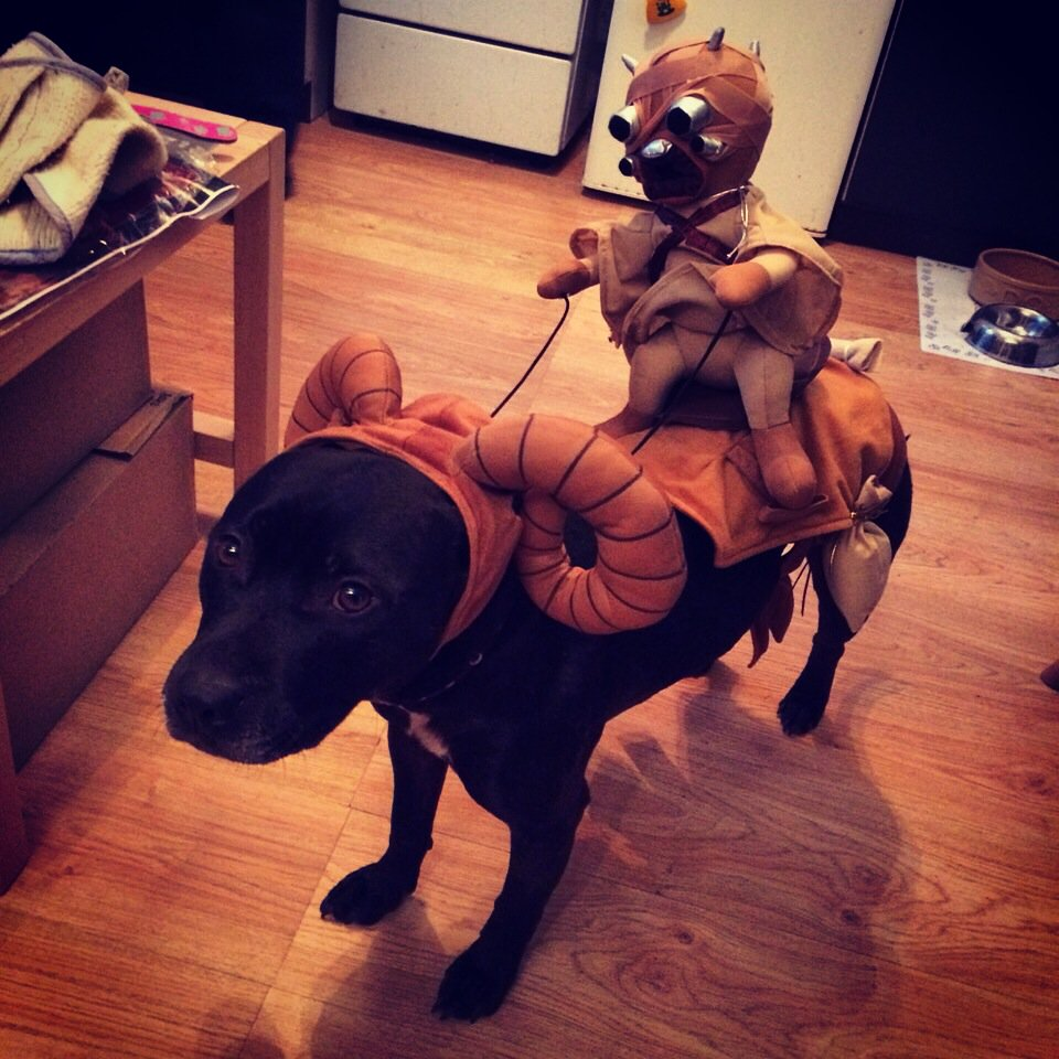 Our dog is prepared for Star Wars... https://t.co/PCSimsZKZr