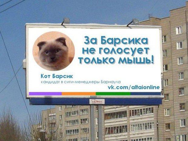 Elezioni Sindaco in Siberia, il gatto Barsik in testa ai sondaggi