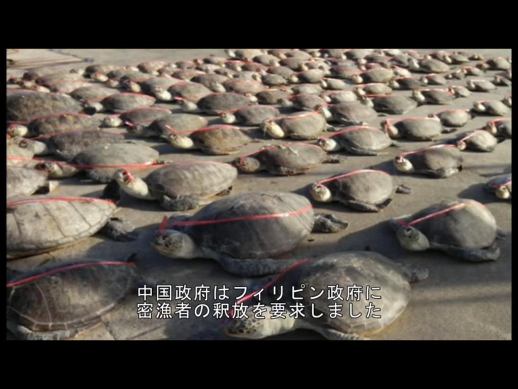 比警察は、昨年絶滅危機種のウミガメ五百頭を密漁した中国船を拿捕。中国はこの地域の主権を主張し「不法」に拘束した漁師の即時釈放を要求したそうです。これ、日本にとって他人事じゃないですよ https://t.co/MqqolfNOVI https://t.co/z53YyALxIH