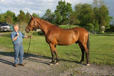 Our boy #Largo is still missing, please RT. 27 yo Cleveland Bay stolen out of pasture in WV. https://t.co/aCsfKjiQFo https://t.co/HHOGxtjpQ6