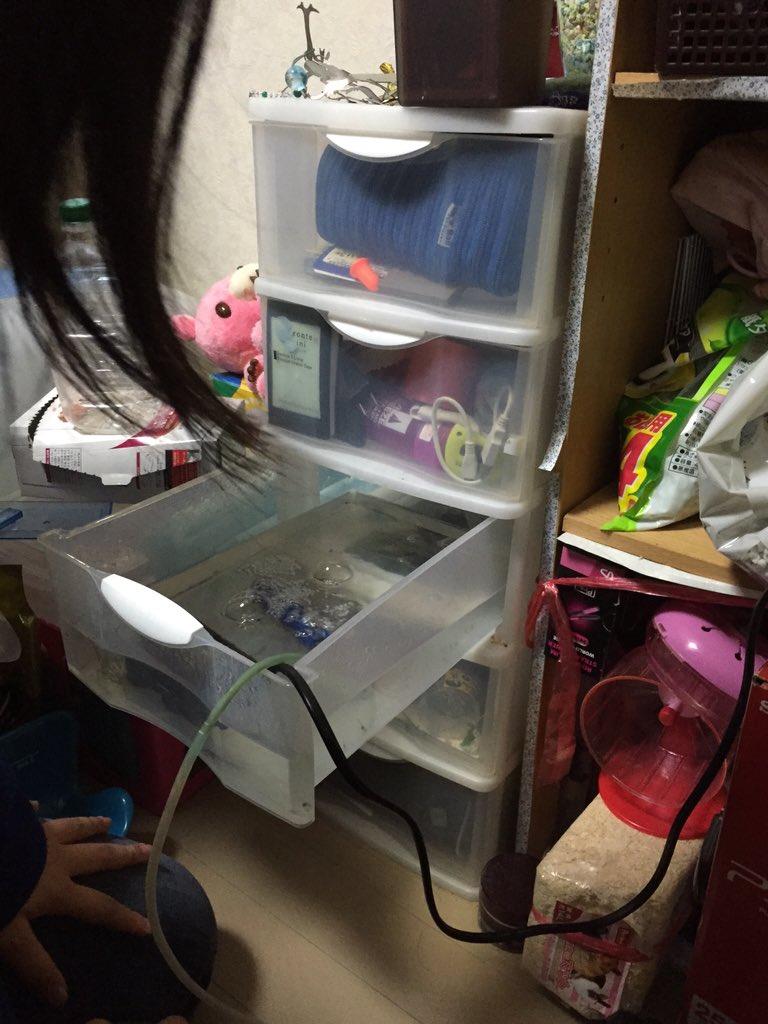 妹の部屋の引き出しの中に、何かが住みついているのだが...