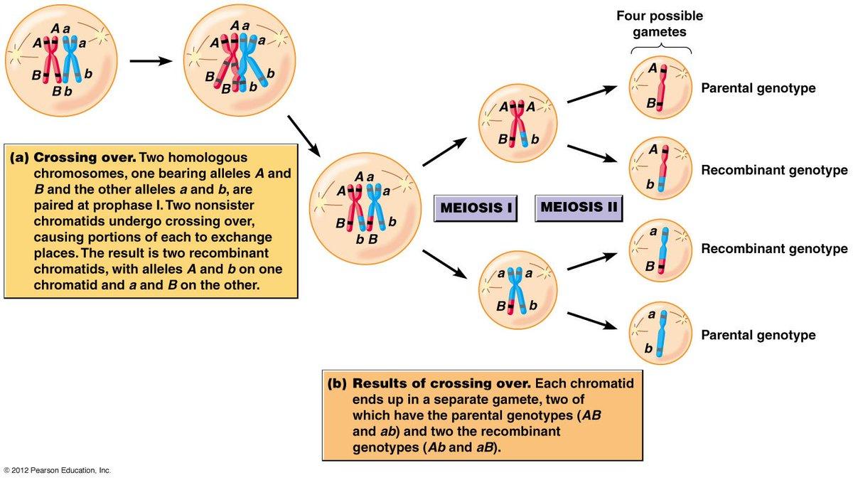 каждый ген занимает определенное место