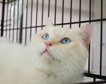 犬猫救済の輪さんhttps://t.co/AufVdfM1P6 【仔猫被災猫 #里親会 】 福島・茨城より多数の救いたい命。温かいお家に迎えて下さい 12月26日・27日13時~17時 川崎市TNR日本動物福祉病院内 https://t.co/bRr0jMShar