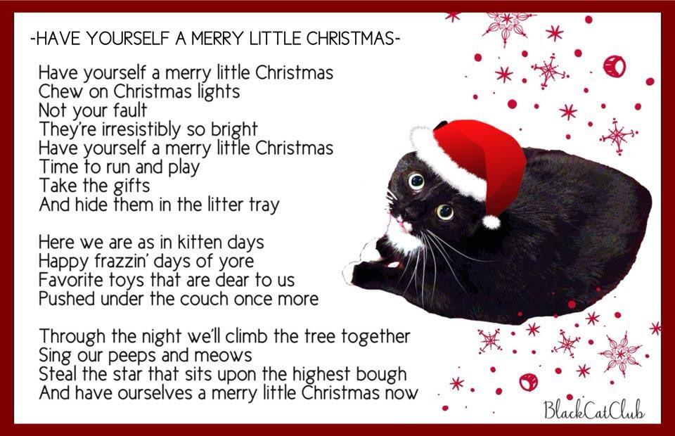 Have yourself a merry little Christmas! #frazz #unfug #ChristmasEve 🎄😼 @hugo4de @ItsMeDeaner @Friskies @georgella13 https://t.co/MEttpP2u9T