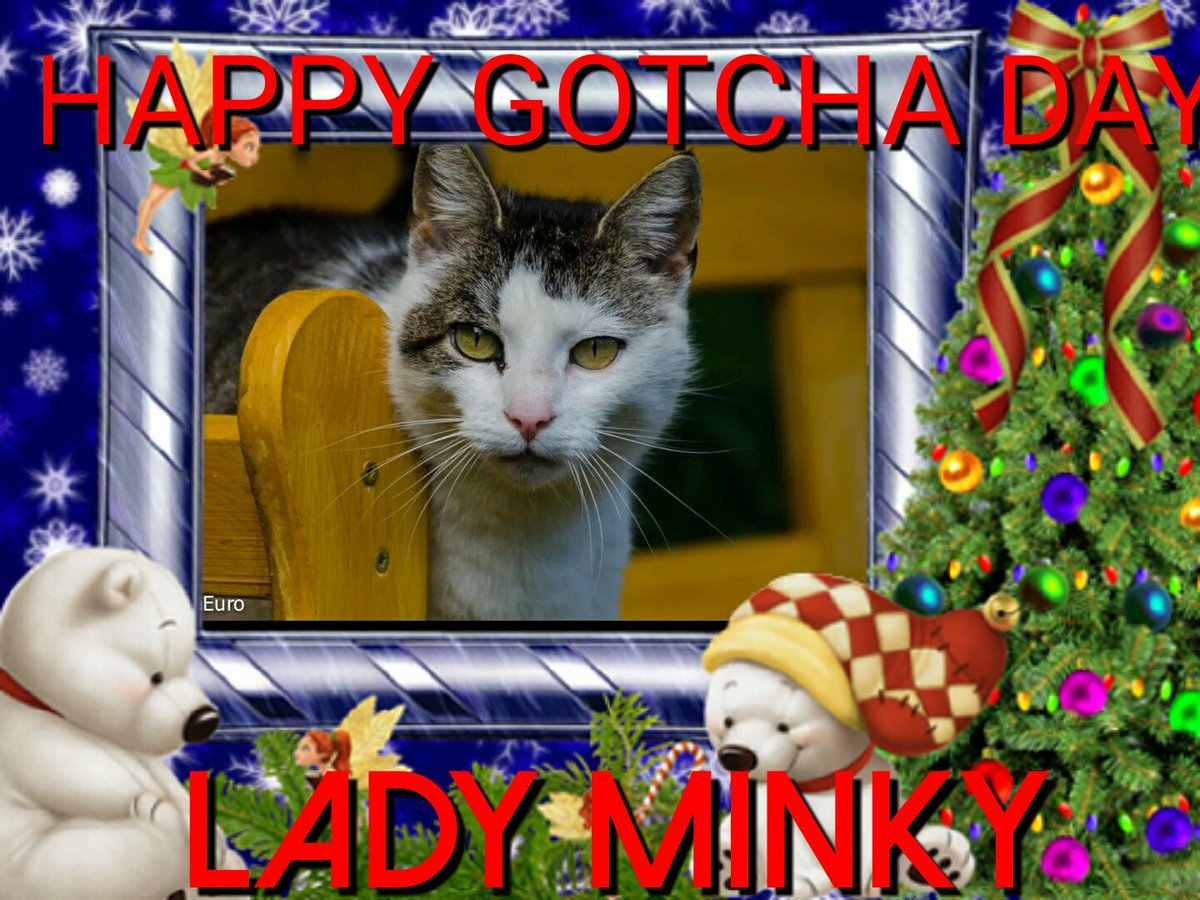 HAPPY GOTCHA DAY LADY MINKY hope you has a pawsome day 💖&hugs 🎁 🎂 🎈 🎉 🎊  @hugo4de @MOUSEandKITTY @MoetBlindCat https://t.co/viQt7w5BPM