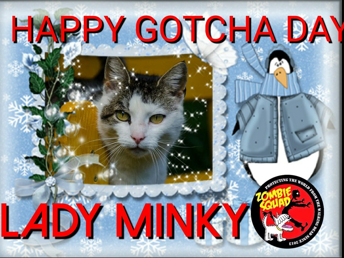 HAPPY GOTCHA DAY LADY MINKY @hugo4de have a purrsum day 🎁🎀🎂🎈🎈 #ZSHQ  @BraveWinston @WestieBiscuit @MadSCWT https://t.co/RlgKRasH7y