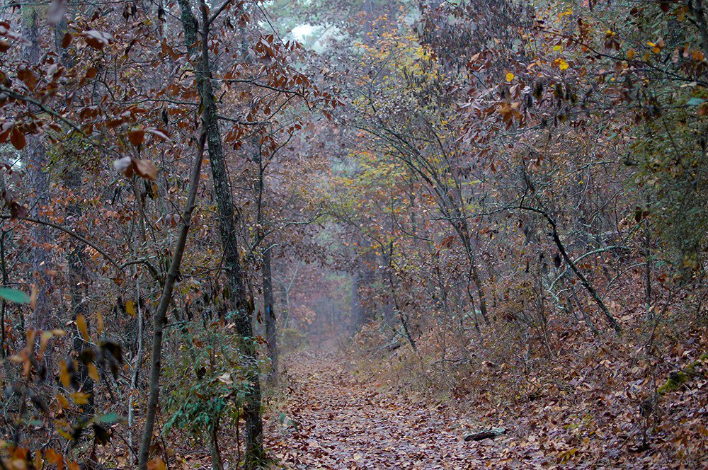 #Rain and #Fog in the Fading #Autumn #Forest