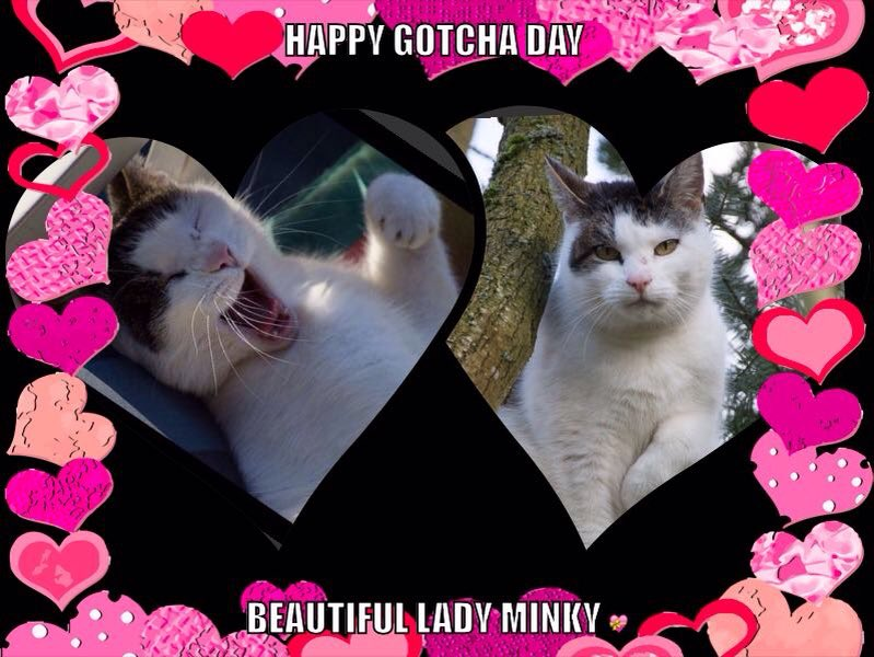 Happy Gitcha day bootiful Minky Moo Moo @hugo4de https://t.co/iCe87c8hrg