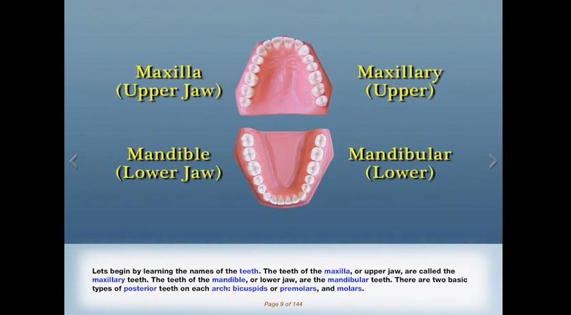 Ptc Dental On Twitter Ptc Training Posterior Dental Anatomy Demo