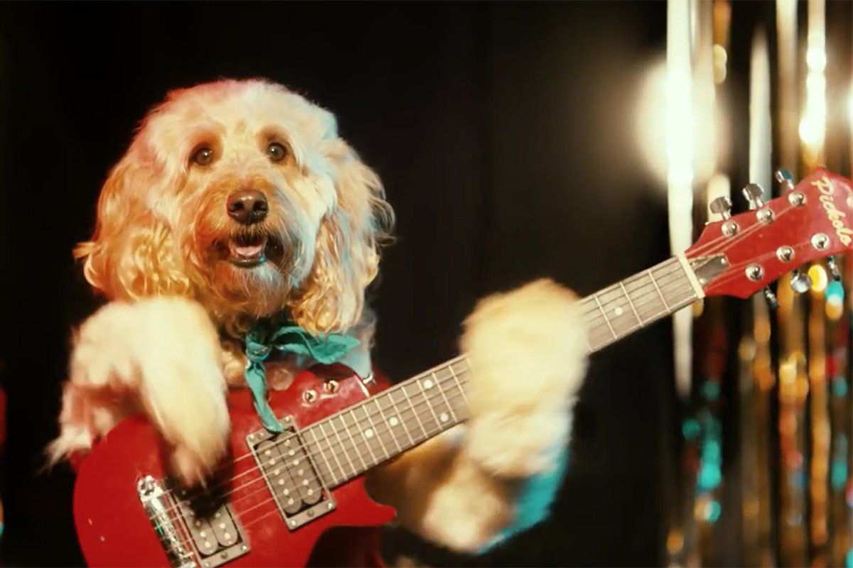 Puppies in sweaters play jingle bells on guitar. Merry Christmas. https://t.co/PNMunRnkv1 https://t.co/BF7zWDOrgU