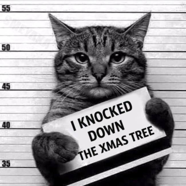 Enough said. Cat owners around the world have been there. #cats #christmastree #Christmas #Busted #KittyConvict https://t.co/1NcbShhvfT
