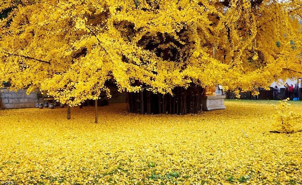 صورة لشجرة عمرها 1400 CWgFsI_XAAAxXFu.jpg