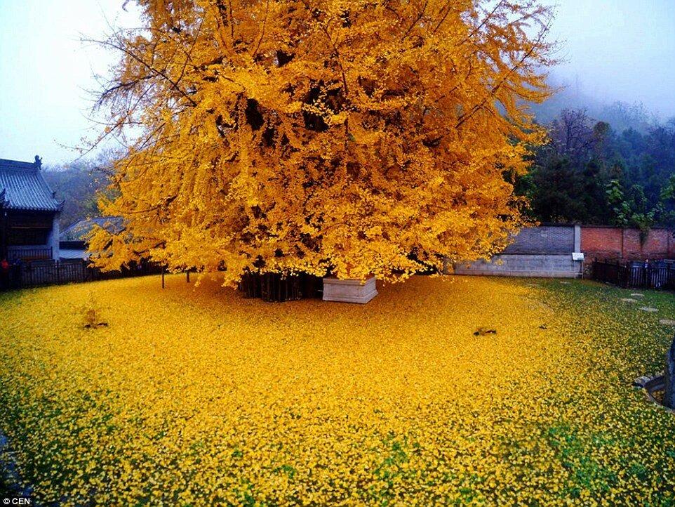 صورة لشجرة عمرها 1400 CWgFyZbWEAA7OsS.jpg
