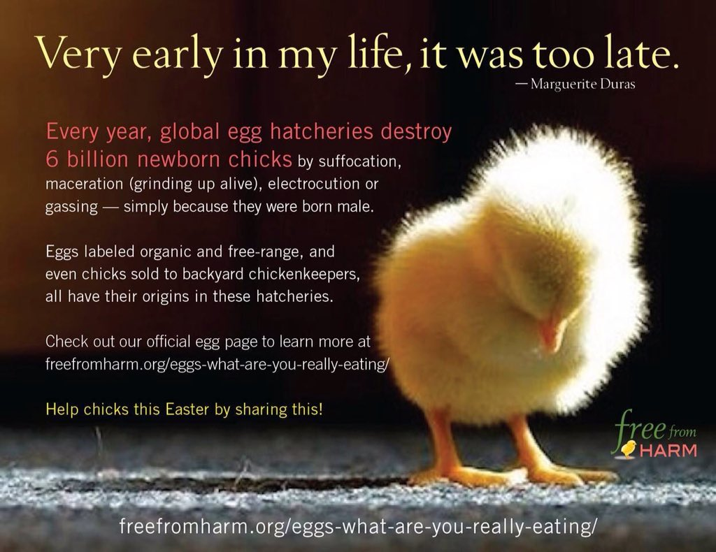 """Dr Vegan on Twitter: """"Are you #vegetarian? Eggs & dairy are ..."""